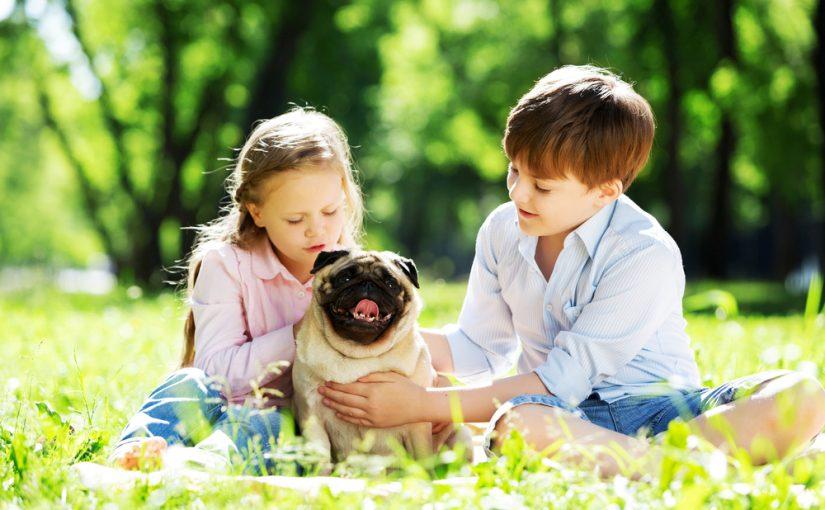 Cómo dar confianza a un perro