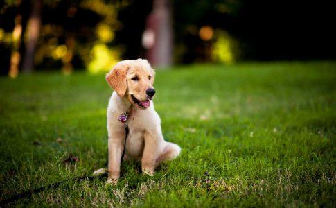 Enseñar a un perro a sentarse