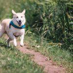 Cómo enseñarle a tu perro a atacar