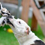 Cómo enseñarle a tu perro a no morder