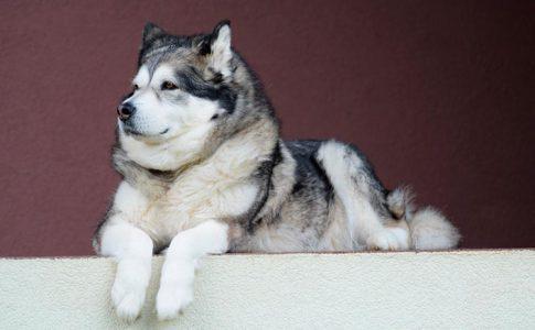Cómo ordenarle a un perro a que se siente