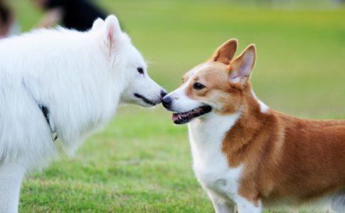 Presentar a dos perros