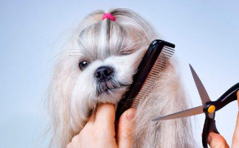 Cortar el pelo a mi perro con tijeras