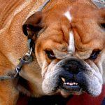 ¿Cómo hacer que mi perro no sea agresivo?