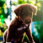 Cómo averiguar las vacunas que tiene un perro abandonado