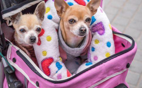 Pasos para hacer un pasaporte a un perro