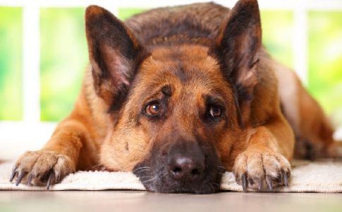 Síntomas ansiedad en perros
