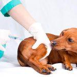 Consejos para vacunar a un perro