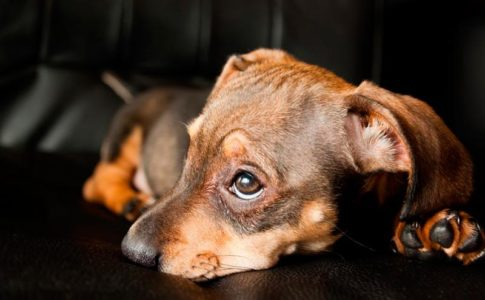 Cómo saber si a un perro le gusta la oscuridad