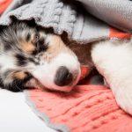 Problemas habituales en el parto del perro