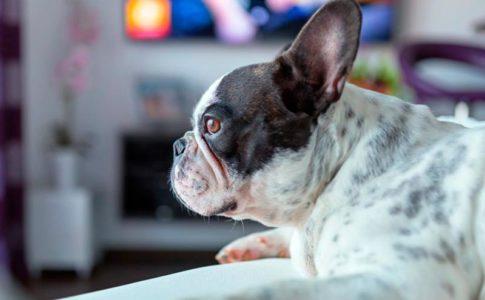Rasgos y características de perritos felices