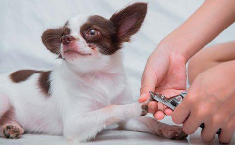 Cortarle las uñas al perro en casa
