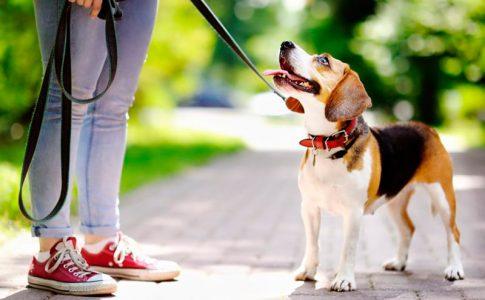 Tips para los cuidados de los perros