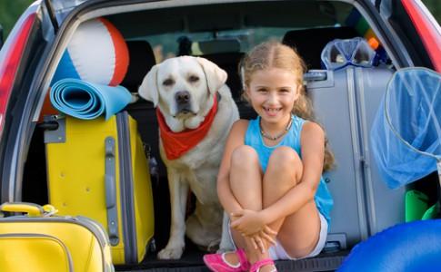 Recomendaciones para viajar con perros