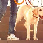 Cómo saber si los perros se contagian por coronavirus