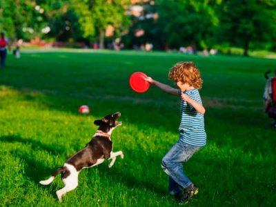 Cosas que los perros saben de sus compañeros