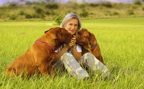 El apareamiento del perro y la madurez sexual