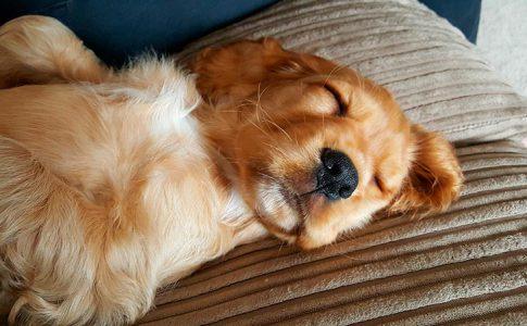 Cuándo es aconsejable hacer la desparasitación del cachorro por primera vez