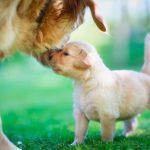 A qué edad o mes hay que separar al cachorro recién nacido de la madre