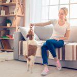 Inconvenientes de las golosinas para perros
