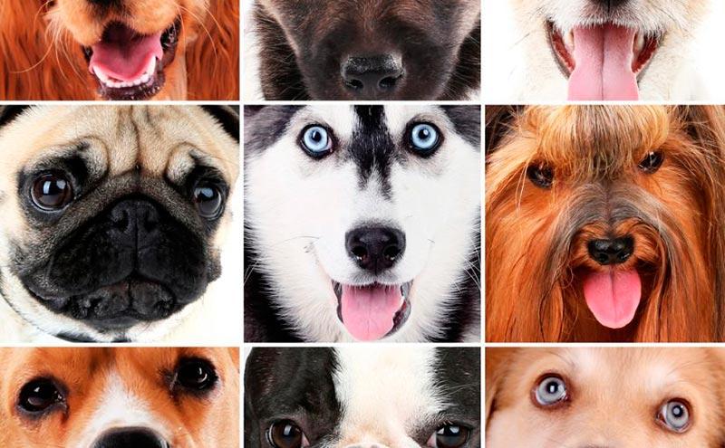 Cuántas Razas De Perros Existen Mundo Perro