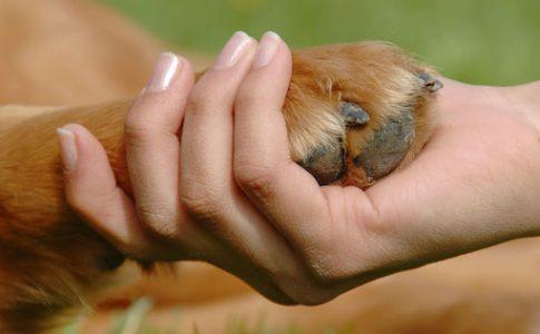 Precio de adoptar un perro