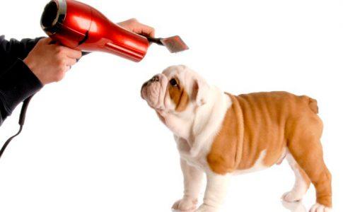 ¿Qué vale cortarle el pelo a un perro?