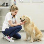 Precio de una consulta con el veterinario