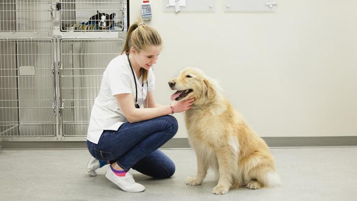 Cuánto Cuesta Una Consulta Con El Veterinario Mundo Perro