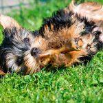 ¿Cuánta cantidad de comida debe comer un perro senior?