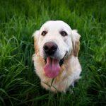 ¿Cuánta cantidad de pienso debe comer un perro en un día?
