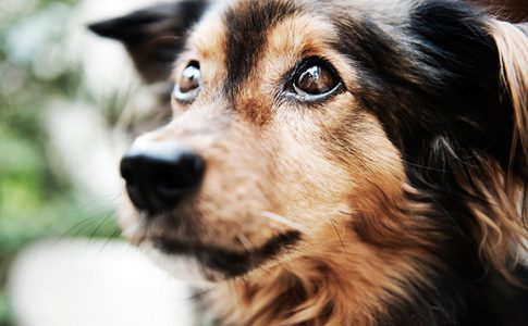 ¿Cuántos años vive un perro mestizo?