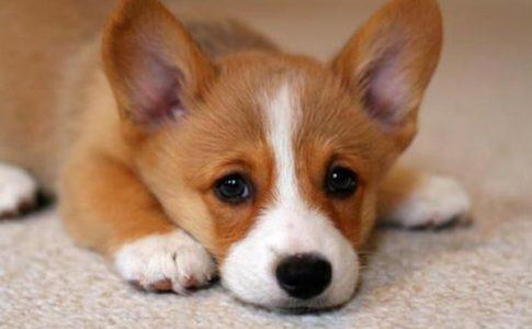 ¿Cuánto cuesta esterilizar a un perro?