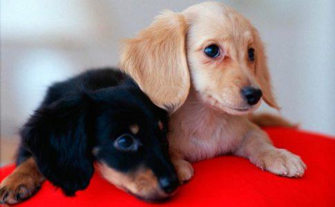 ¿Cuántas crías pueden tener los perros mestizos?