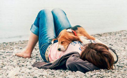 Cuidados esenciales de los perros