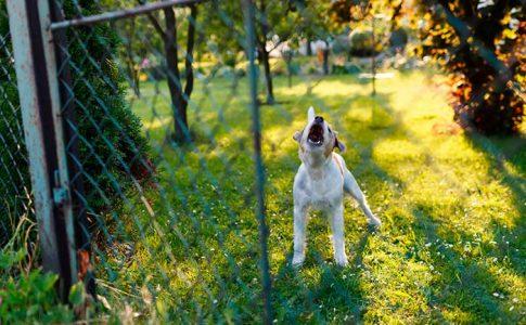 Responsabilidad legal en los perros agresivos