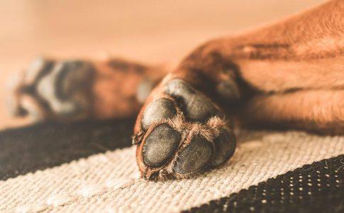 Homeopatía para desparasitar a un perro