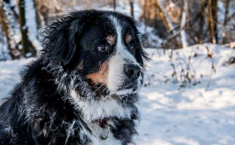 Normativa sobre la desparasitación de los perros