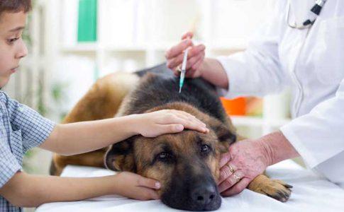 Vacunar después de desparasitar