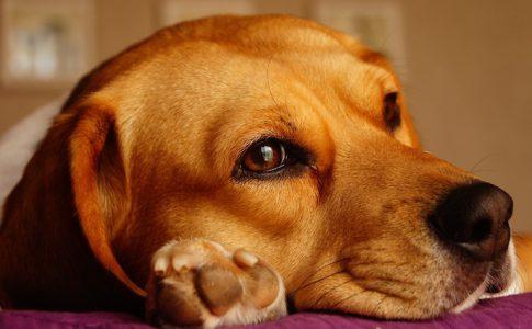 ¿Se puede devolver un perro después de una adopción?