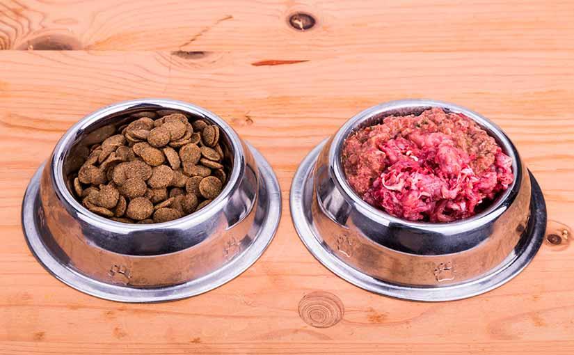 Dieta BARF en perros