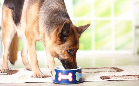 Dieta perros diabéticos