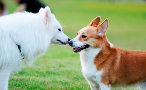 ¿Castrar o esterilizar a un perro?