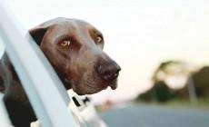 Documentación para viajar con perros