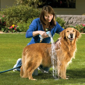 Donde bañar al perro en casa