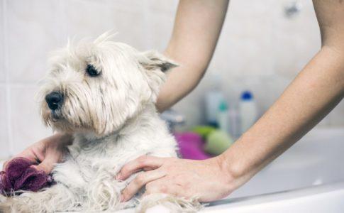 Cuando duchar al perro después del parto