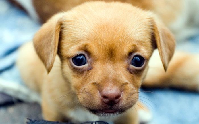 edades de perro cachorro