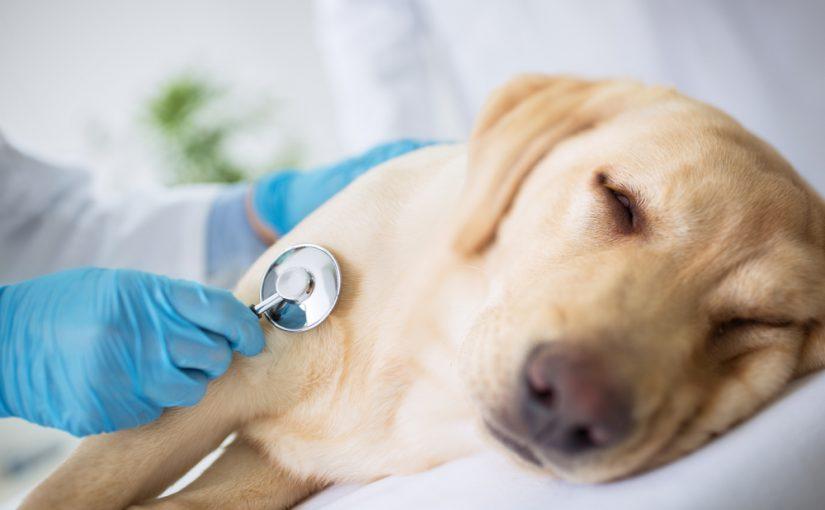 Qué hacer si mi perro se ha puesto enfermo tras la vacunación?