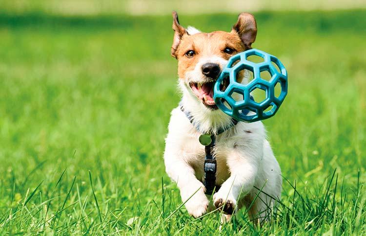 perros ejercicio