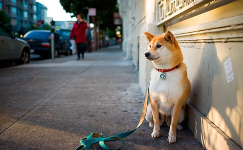 tu perro tiene miedo a salir a pasear